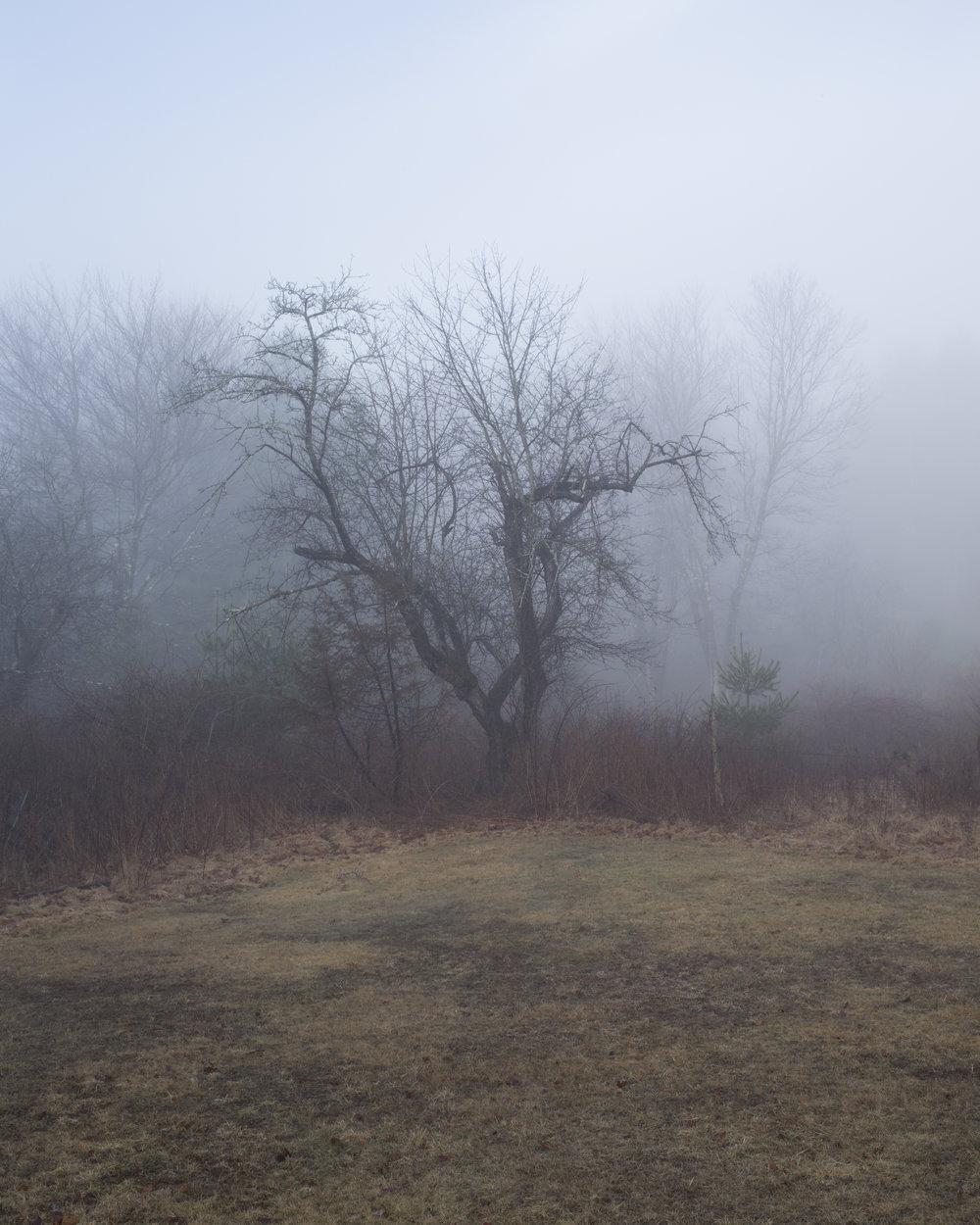 Tree in Fog.jpg