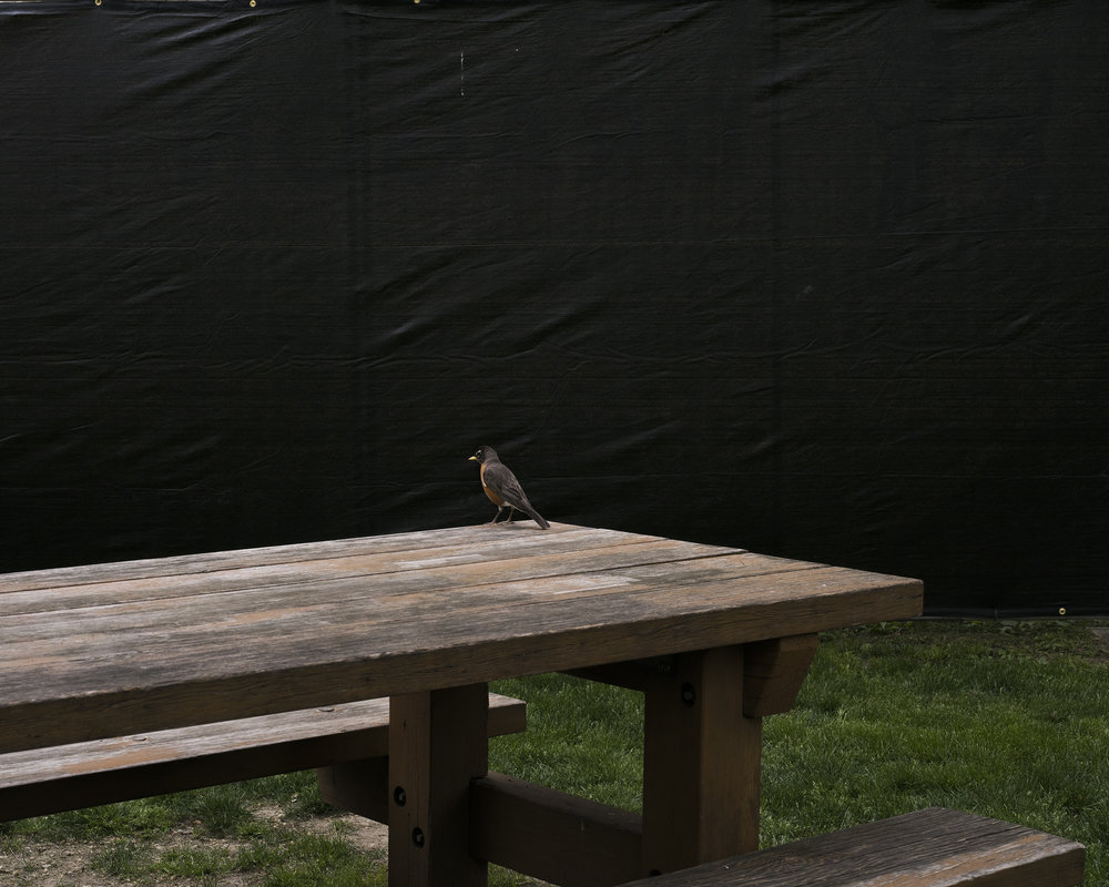 Robin on a picnic table.jpg