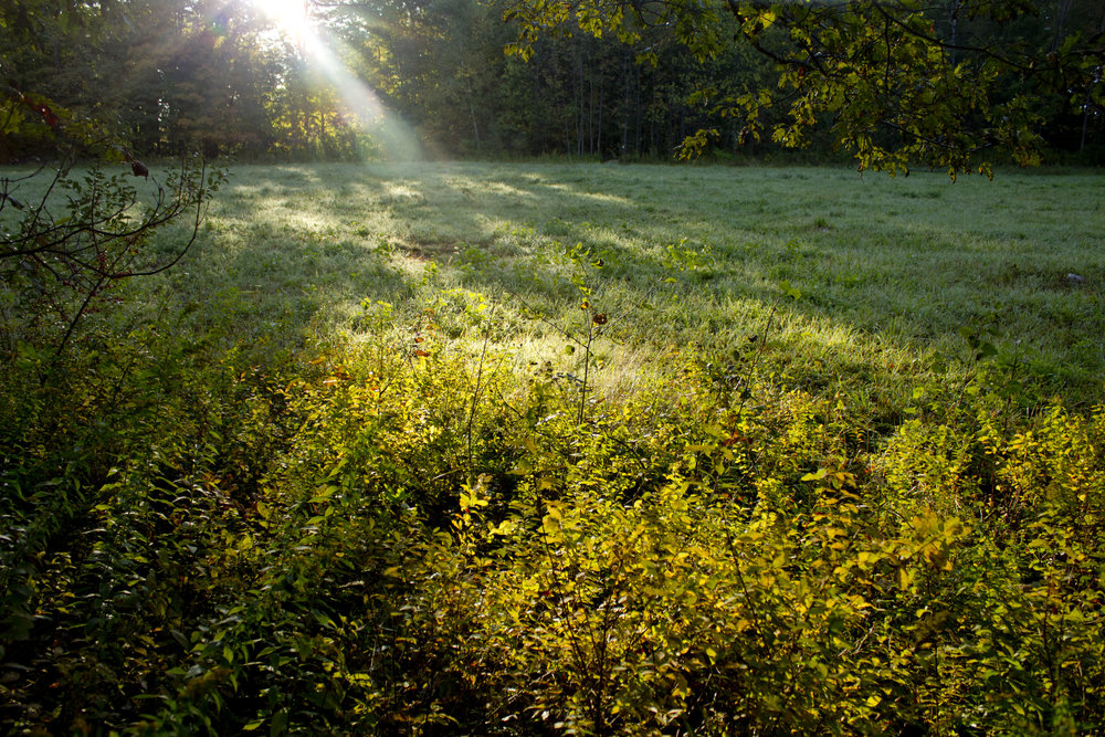 rp morning field.jpg