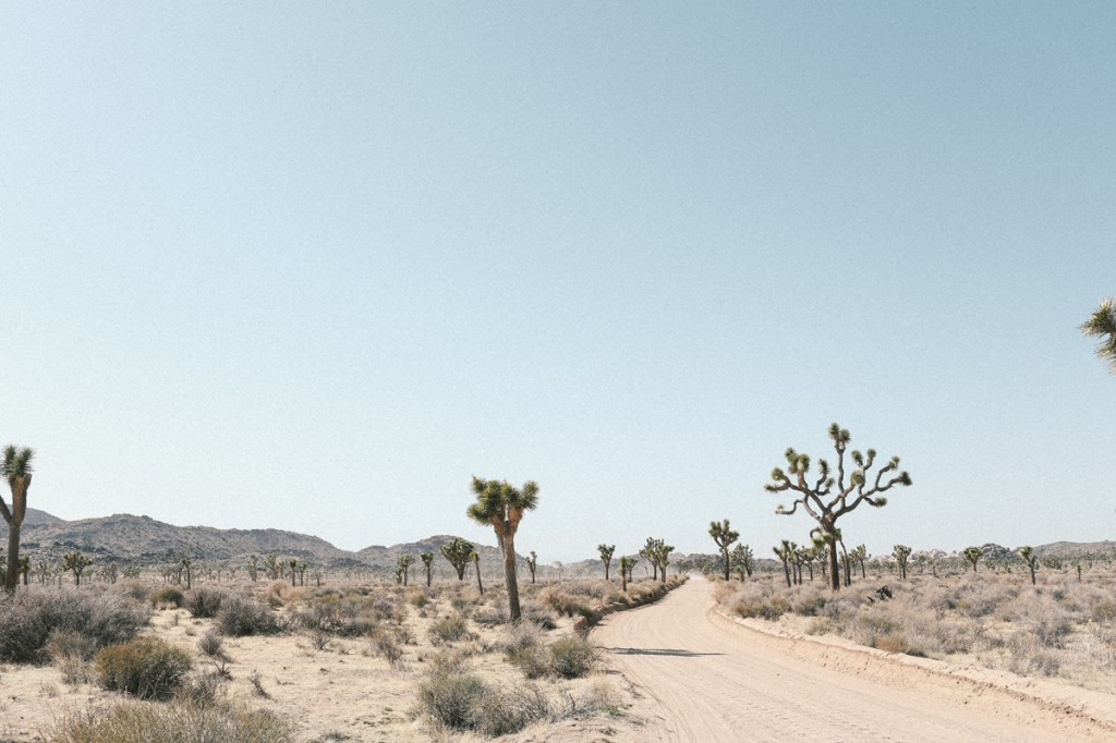 Joshua Tree, Road Trip