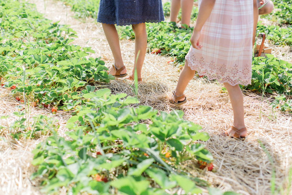 Zooey Magazine: Strawberry Picking in Wisconsin with Family.