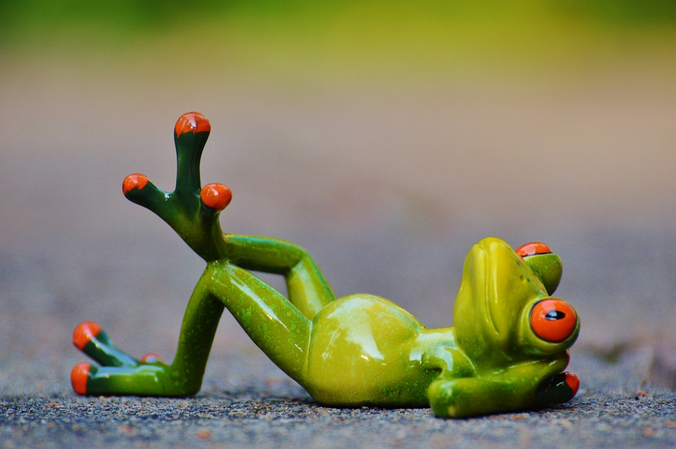 A relaxing frog