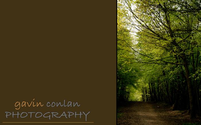 gavinconlan.gavinconlanphotography.EssexPhotography.LondonPhotographer.Londonportraitphotographer.essexweddingphotographer.Fashion.Portraiture.Portraits.PetPhotography.ChalkneyWoods.-6.jpg