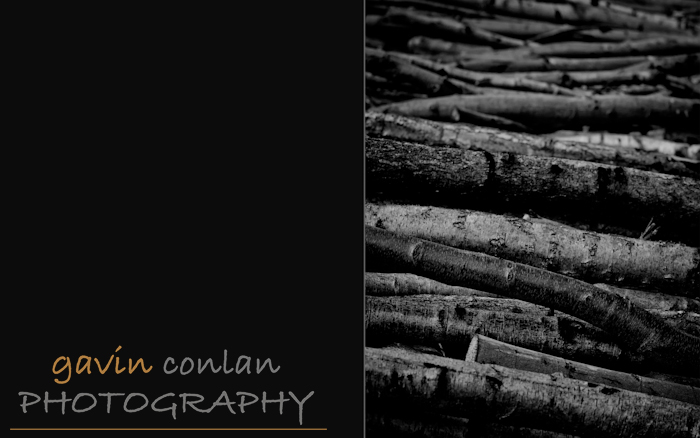 gavinconlan.gavinconlanphotography.EssexPhotography.LondonPhotographer.Londonportraitphotographer.essexweddingphotographer.Fashion.Portraiture.Portraits.PetPhotography.ChalkneyWoods.-15.jpg