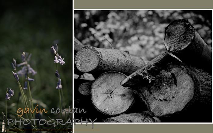gavinconlan.gavinconlanphotography.EssexPhotography.LondonPhotographer.Londonportraitphotographer.essexweddingphotographer.Fashion.Portraiture.Portraits.PetPhotography.ChalkneyWoods.-4.jpg
