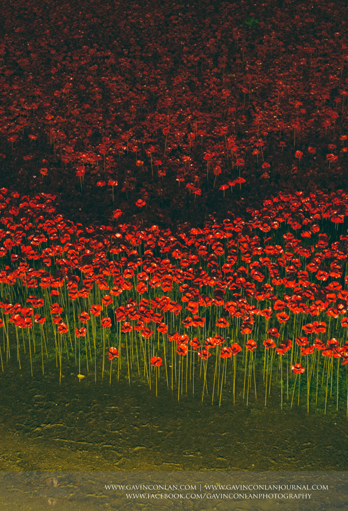 a close up of the poppies at Tower of London, Blood Swept Lands and Seas World War One tribute