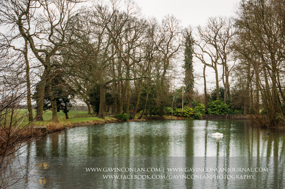 a swan asleep in the dower house lake at  Coworth Park Hotel  by  gavin conlan photography Ltd