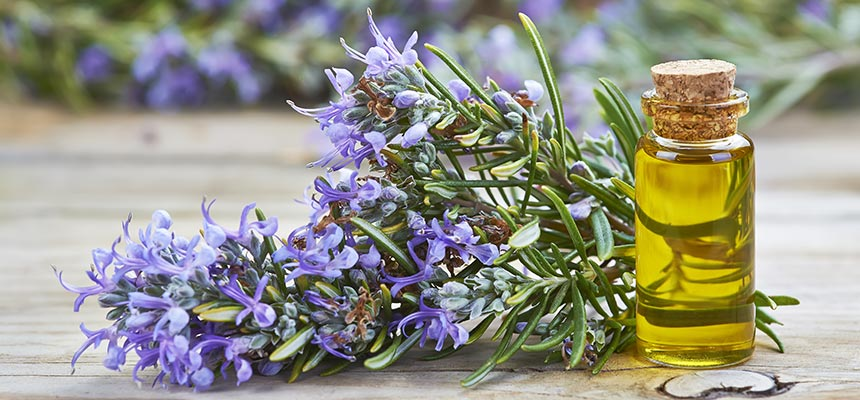 Rosemary Fresh Cleaning