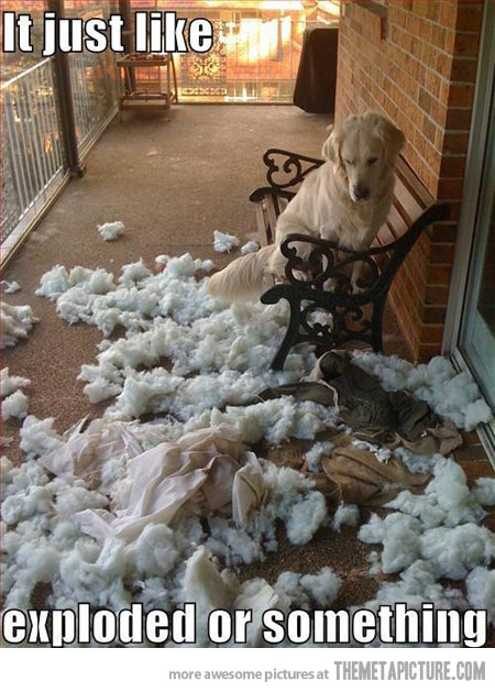 funny-dog-pillow-explosion.jpg