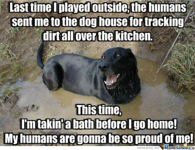mud-puddle-dog.jpg