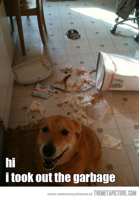 garbage-mess-dog.jpg