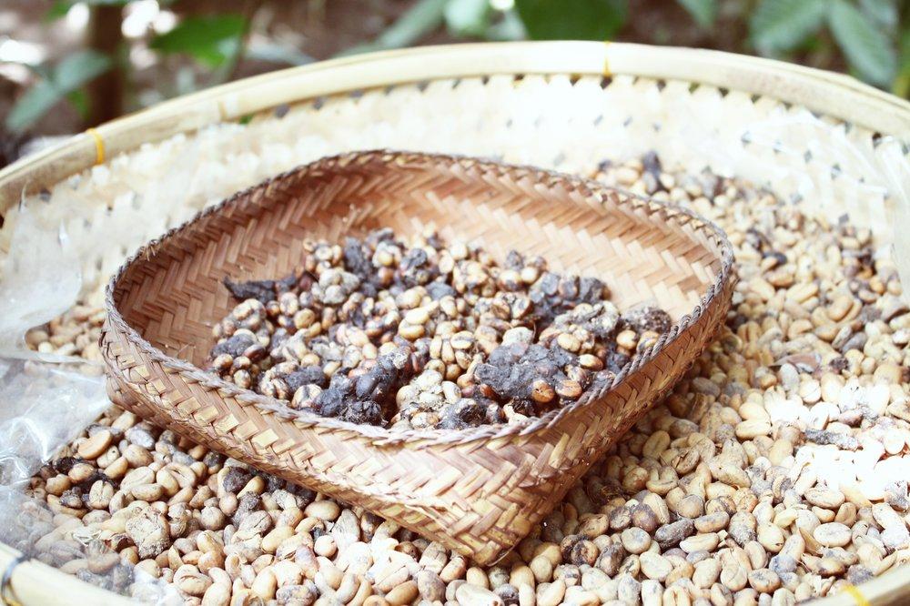 luwak-coffee-ubud-5