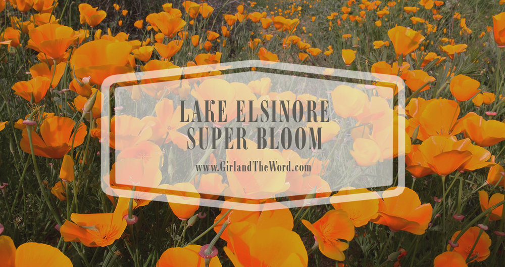 lake-elsinore-super-bloom-walker-canyon