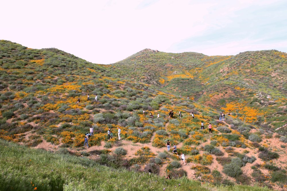 lake-elsinore-super-bloom-5