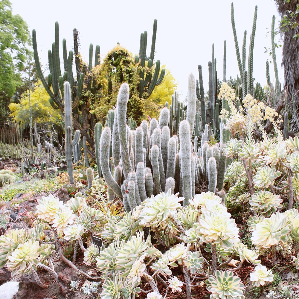 girlandtheword-desert-gardens-huntington-library-1