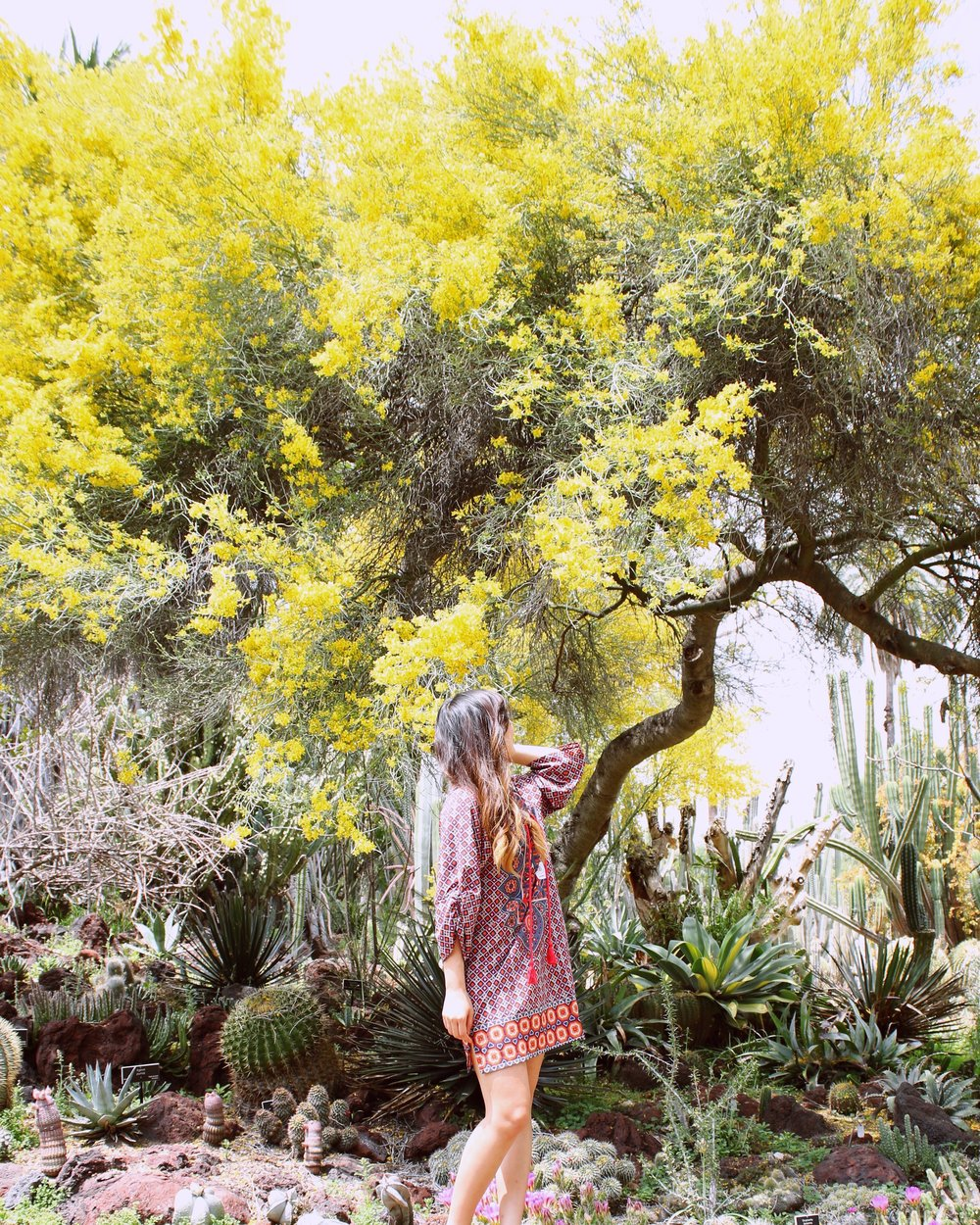 girlandtheword-desert-gardens-huntington-library-3