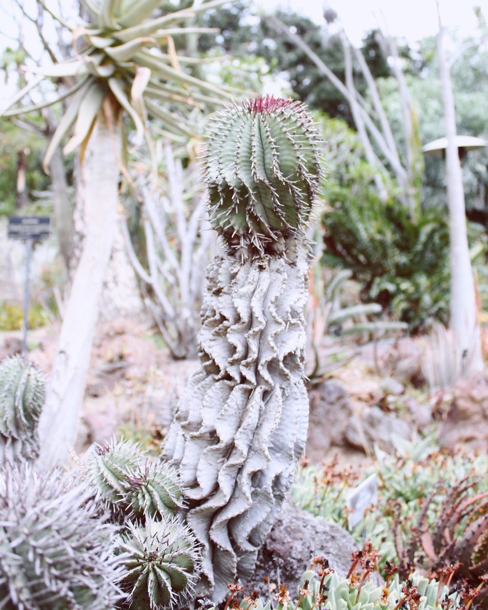 girlandtheword-desert-gardens-huntington-library-6