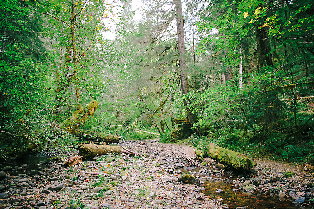 Oregon Road Trip Photographer 43