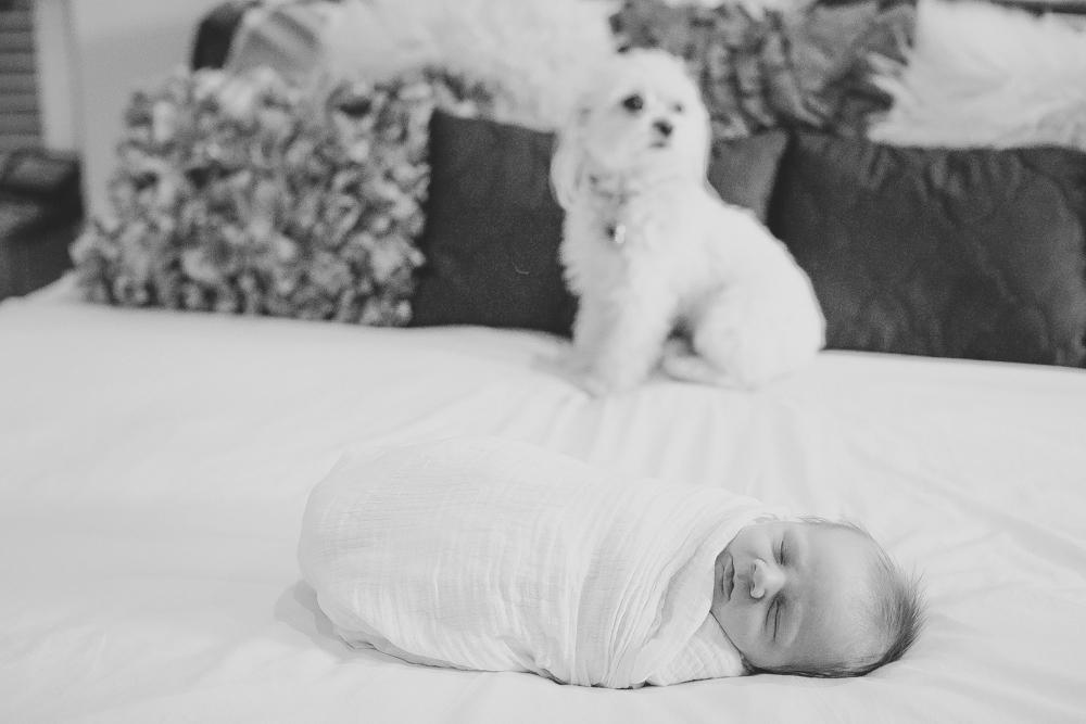 Lifestyle Newborn Photographer Boulder (79 of 134).jpg