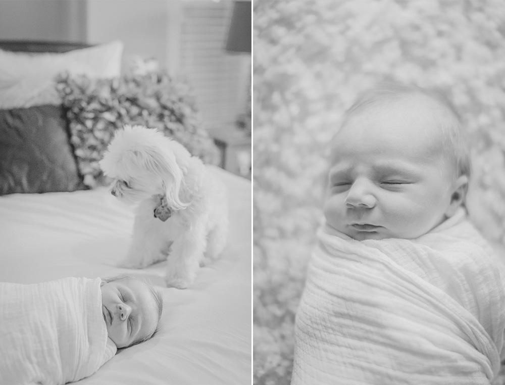 Newborn Photographer Louisville 7.jpg