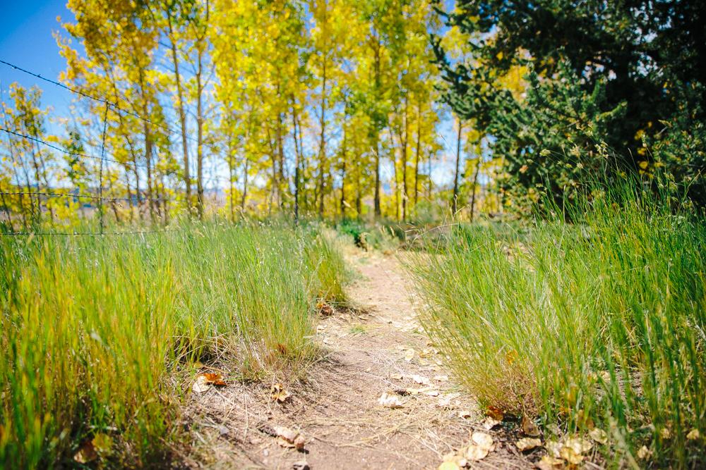 Colorado Road Trip0014.jpg