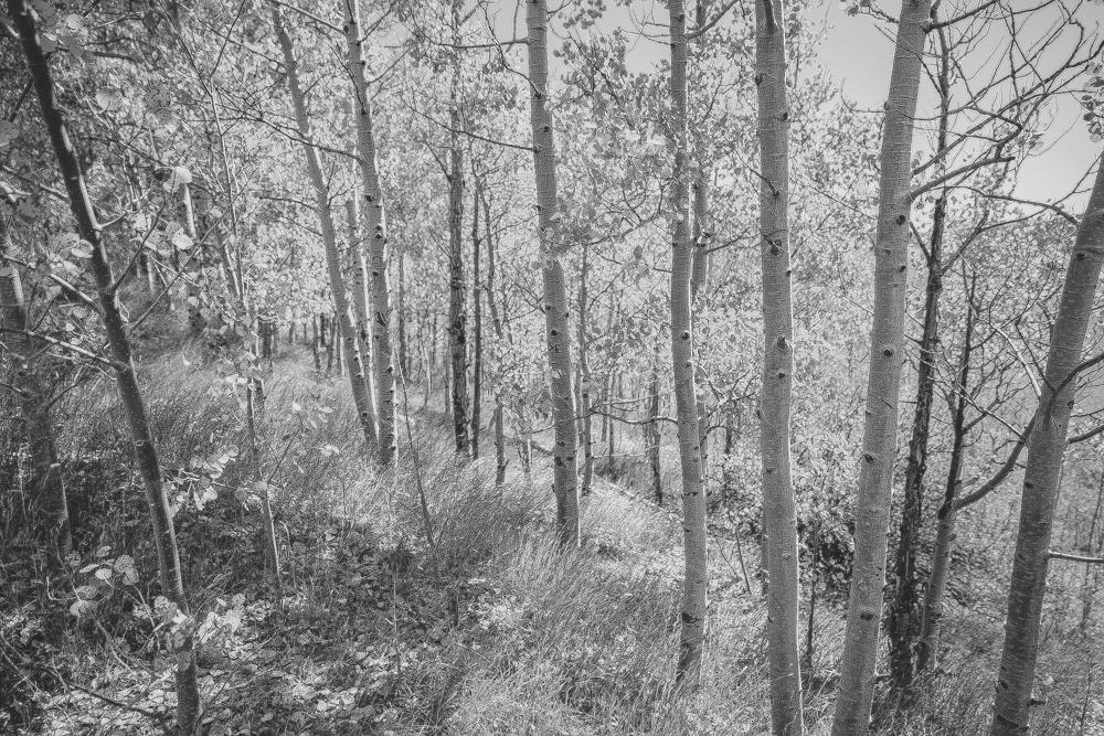 Colorado Road Trip0018.jpg