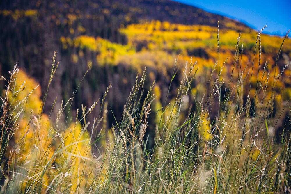 Colorado Road Trip0094.jpg