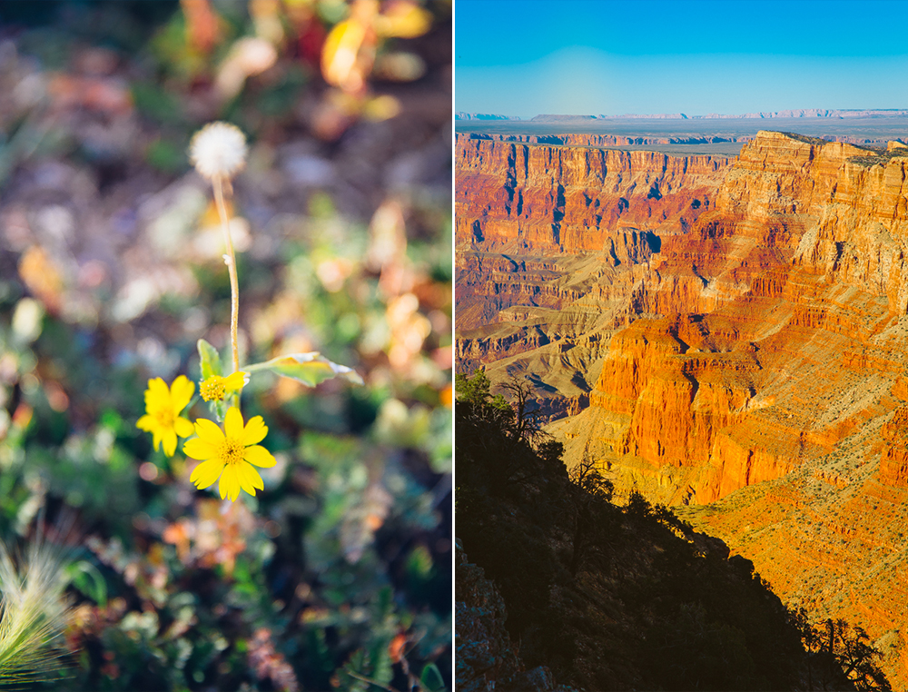 Grand Canyon Road Trip.jpg