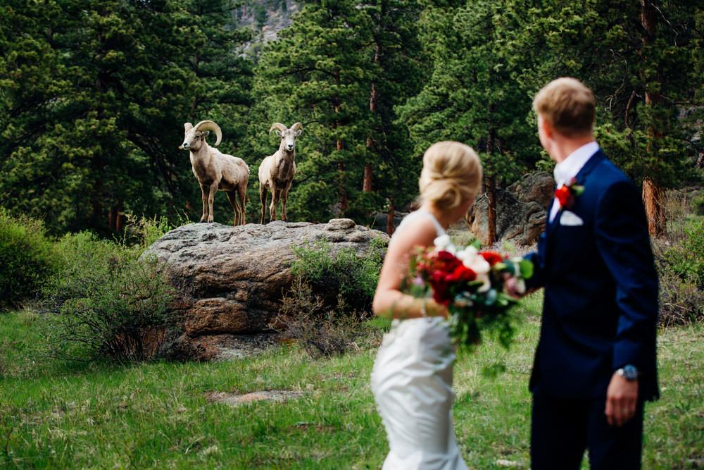 Della Terra Wedding -11.jpg