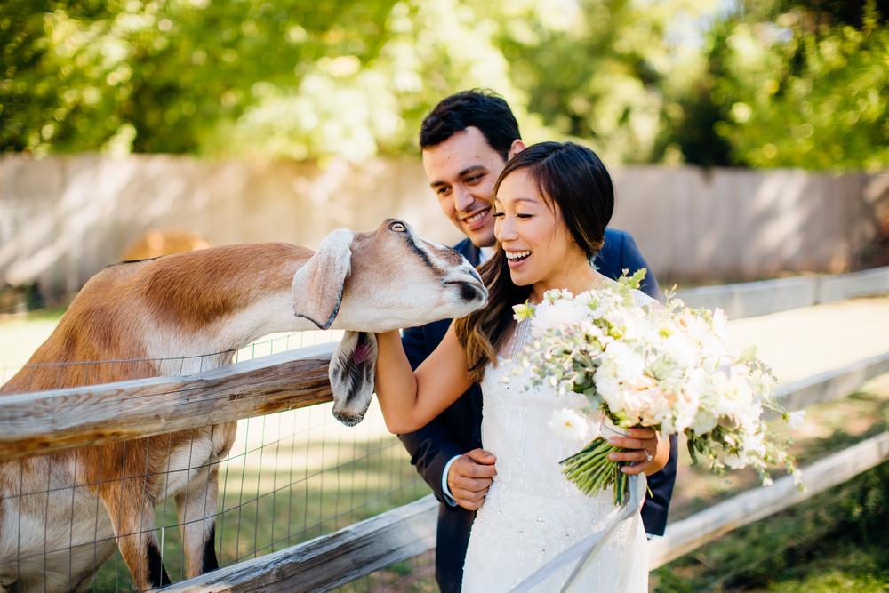 Lyons Farmette Wedding 11.jpg