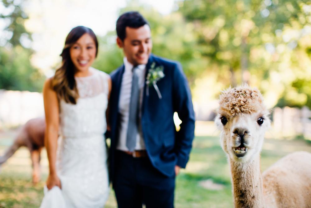 Lyons Farmette Wedding 18.jpg
