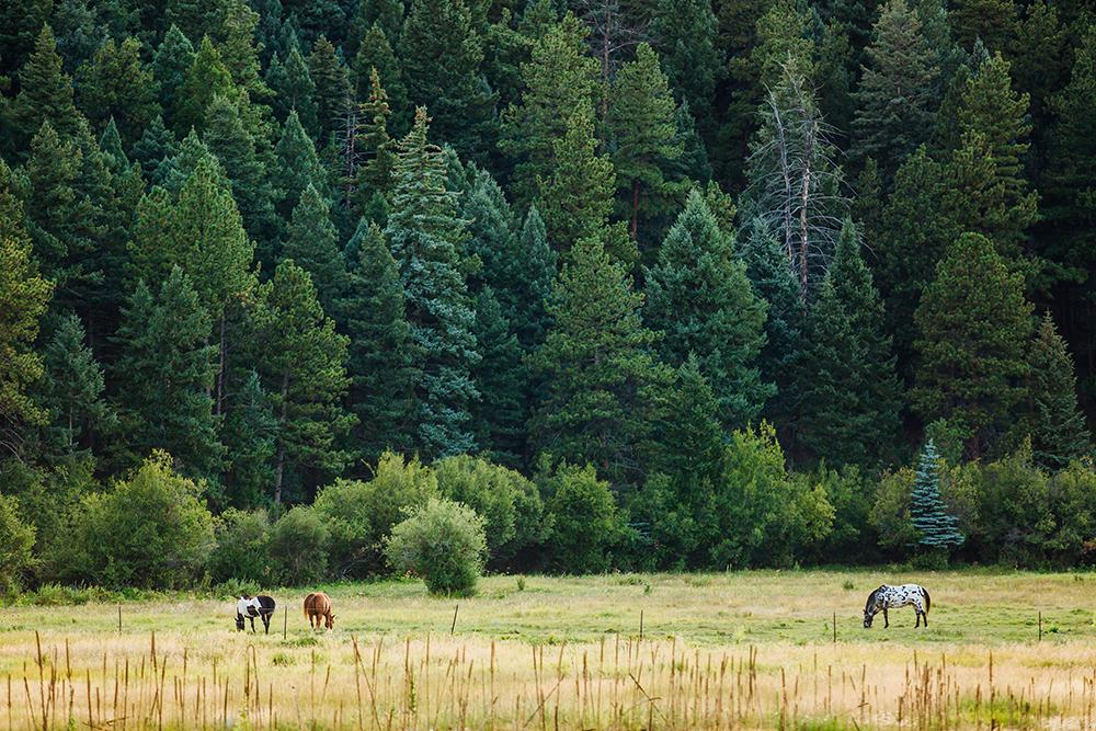 Deer Creek Valley Ranch Wedding 1.jpg