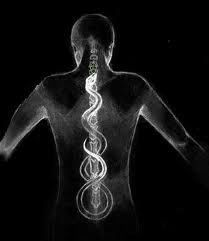 The lengthening of the spine is critical to optimizing the fascial channels of communication through the body and opening the nadis (energetic pathways), allowing infinite potential (kundalini) to rise from the tip of the tailbone to the apex of the brain.