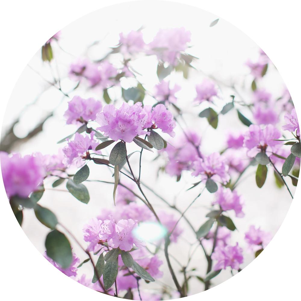 website flowers.jpg