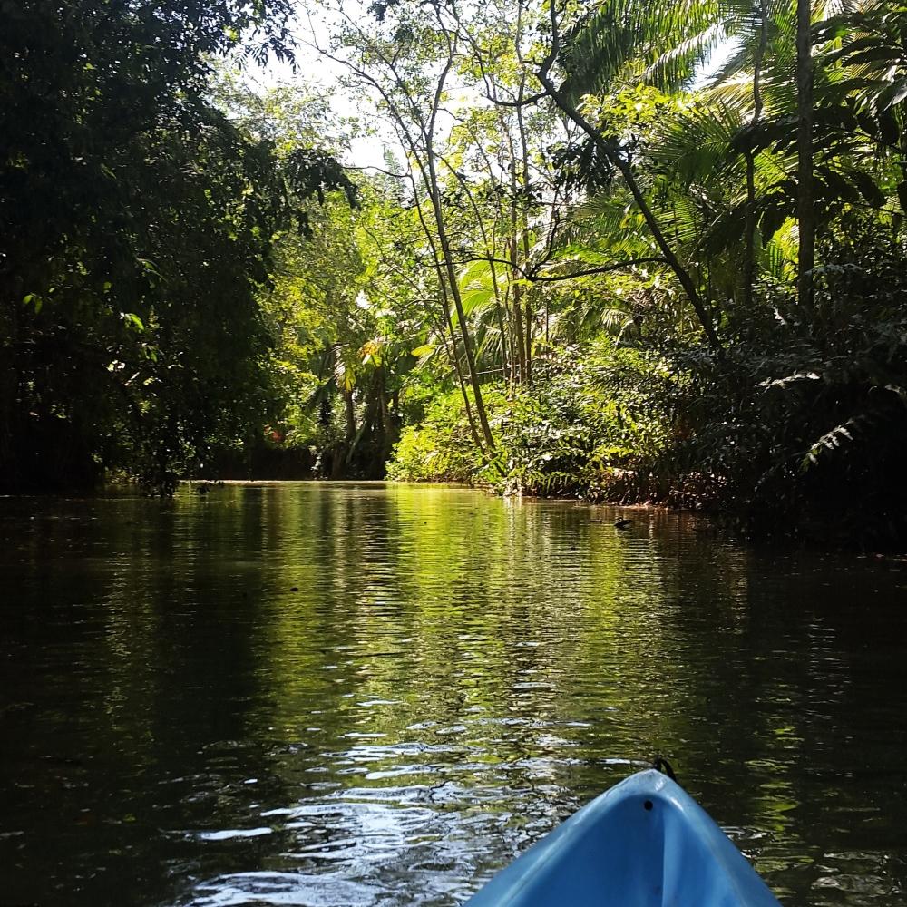 Kayaking in the mangroves of Manuel Antonio