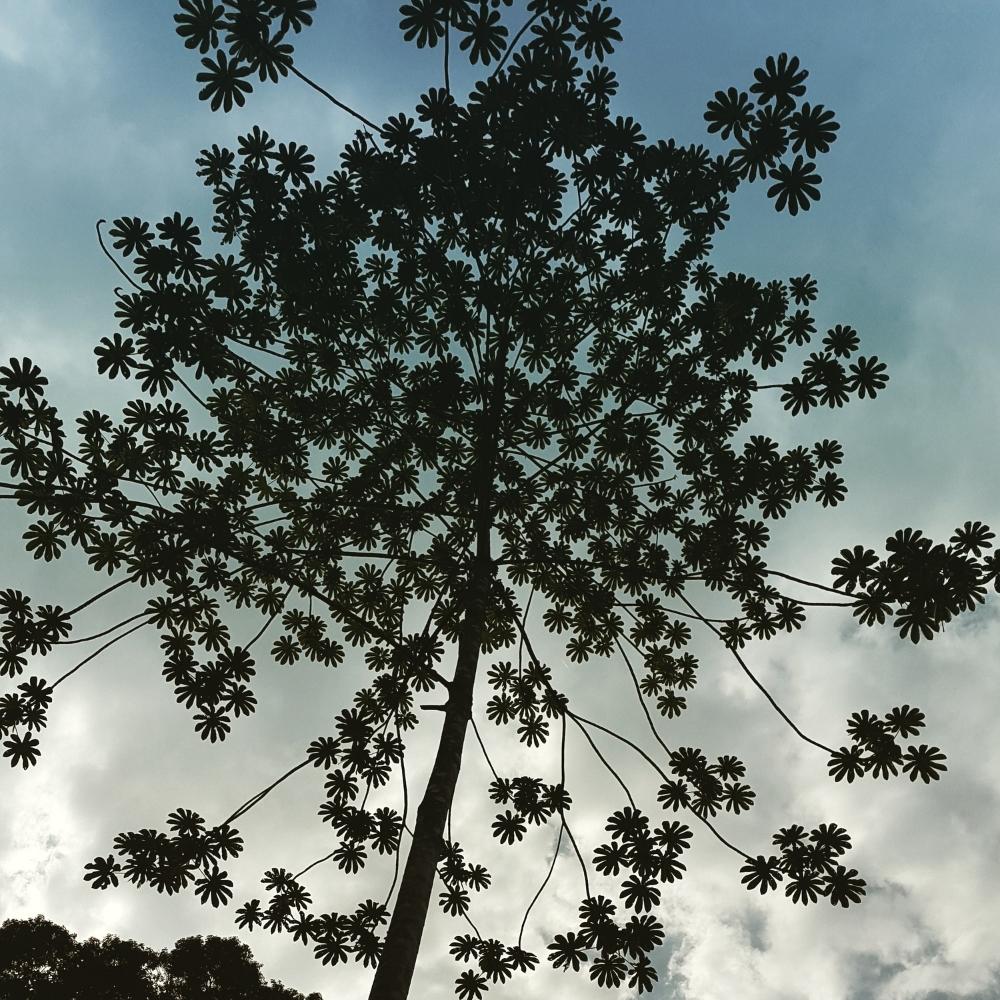 Amazing tree in Saraquipi