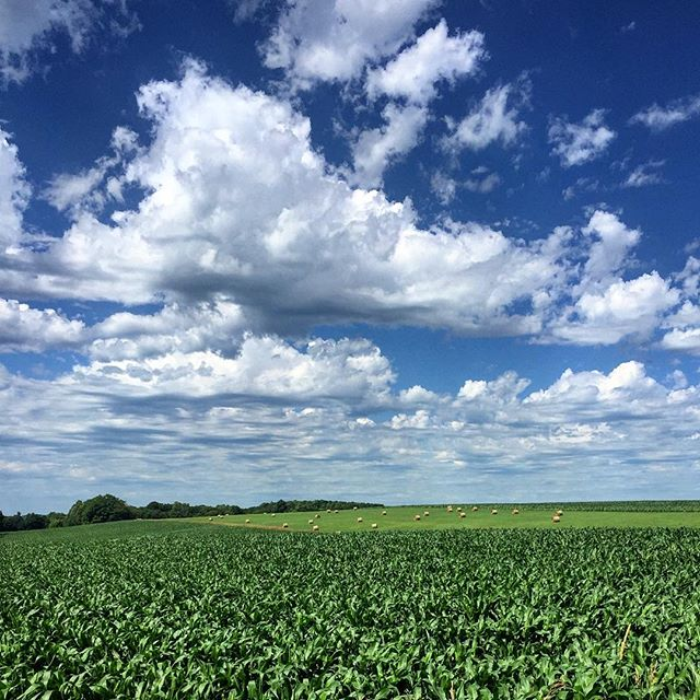 I can't help but like a good #michigan #field in the #summer. I dig those #puffy #clouds too. More to follow... #michigansummers #michigansun #fieldsofgreen #farmland #farm #summertime #sun #cloudysky #color_fab #colorlove #color_rgb #color_vibe #colorfull #puremichigan #green #blue #adventureisoutthere