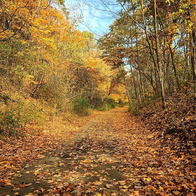 Really #feeling the #fall this year. Seems like the #color is intense. Loving it thou...more to follow... #fallfoliage #fallfeeling #feelslikefall #leaves #colorsoffall #color_vibe #color_photo #color_rgb #color_fab #michiganfall #westmichigan #trees #woods #bikepath #bikeride #rideyourbike #nateabramowski #adventureisoutthere #walkyourcamera #experiencegr #puremichigan