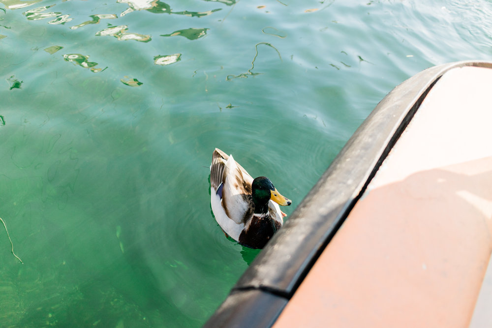 Made a little friend on our canal tour!