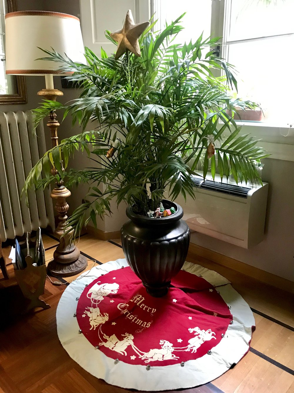 Our Christmas palm tree.