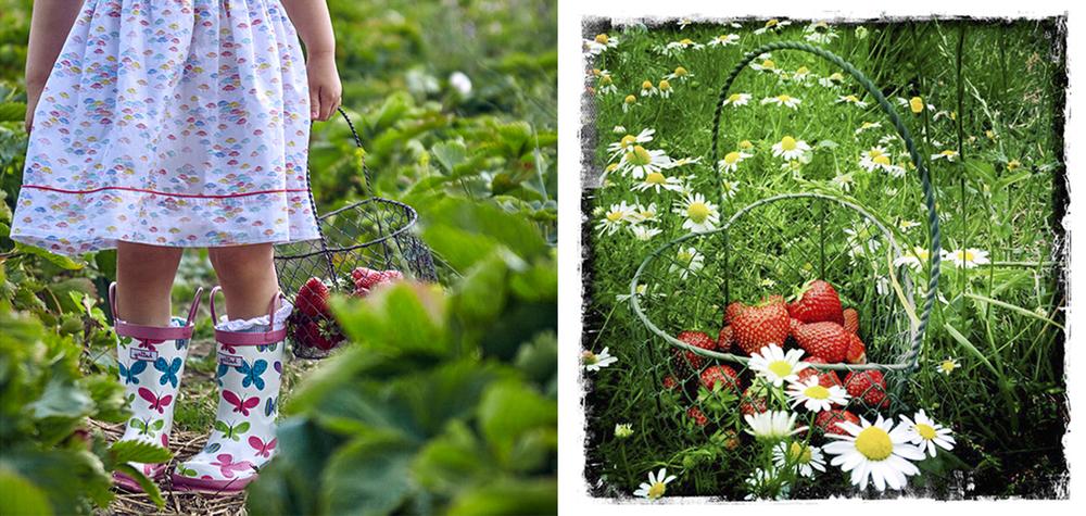 strawberry_1536_01.jpg