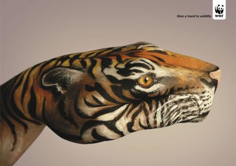 guido_daniele__tiger.jpg