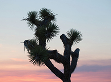 PSP-HOME-joshua_tree_20130719_1613.png