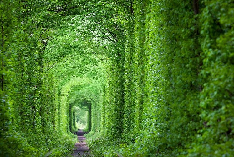 The-Tunnel-of-Love-Ukraine.jpg