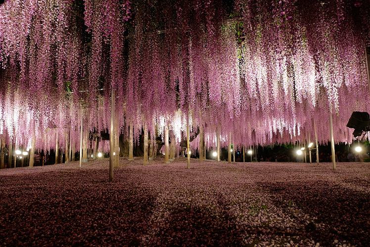 Ashikaga-Flower-Park-Japan.jpg