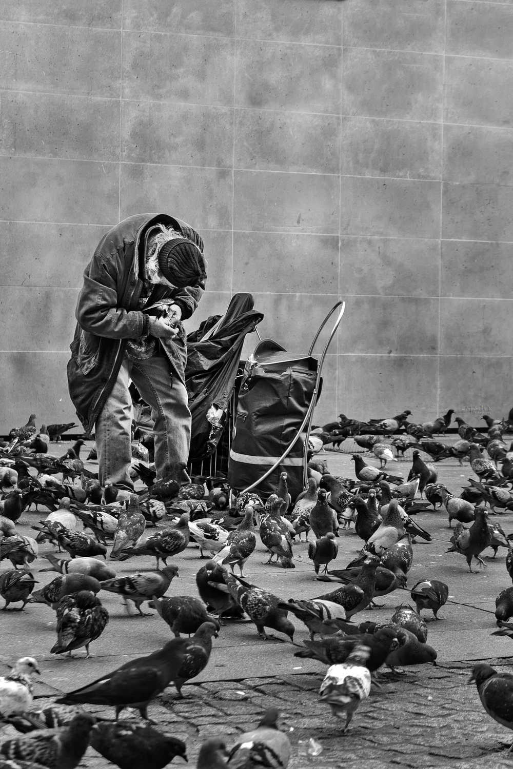 Street Photo in Luxembourg | Catalin Burlacu Photography | Pigeons old man