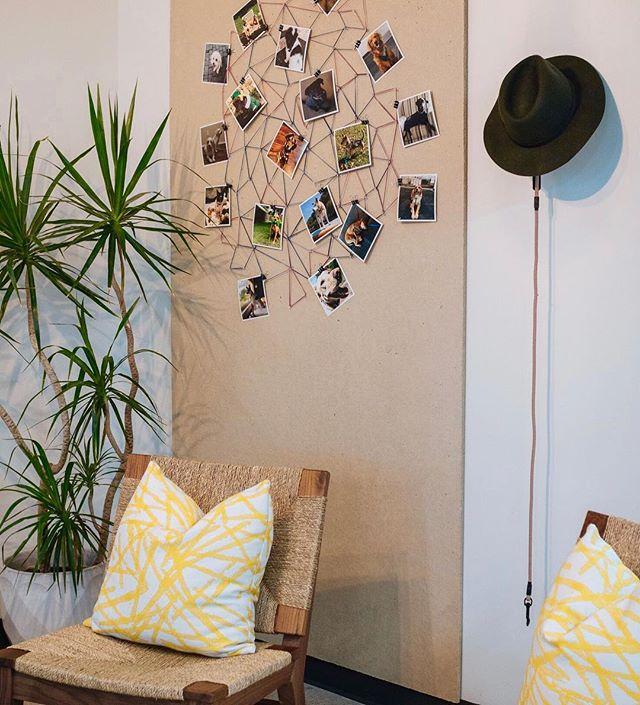 Pups of @spanningbackup  #jamesmatthewdesign . . . #interiordesign #decoration #design #style #stylish #dogs #dogsofinstagram #dogsof512 #commercialdesign #lux #austintx #austin360 #beautiful #entrepreneur #startup #spanning #downtown #tuesday #decor #interiordesigner #interiorstyle #athome #athomestores #office #worklife #pets