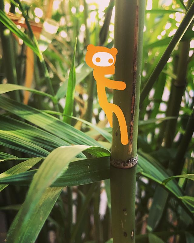 #chooselife #chooselove #saveme #notfromhere #outerspace #happy #enjoylife #trees #tiny #climbing #hiking #alien #orange #discover_earth 🍊💛