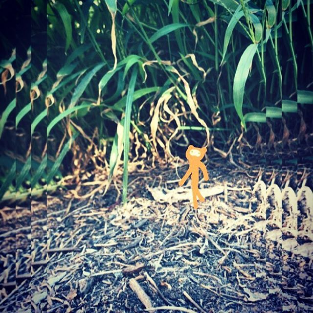 #chooselife #chooselove #saveme #notfromhere #outerspace #happy #enjoylife #trees #tiny #climbing #hiking #alien #orange #discover_earth #grass #love #misunderstood #aesthetic 🍊💛