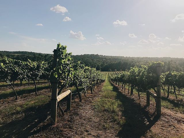 From today's visit to the local vineyard for wine tasting 🍇 We're in East Texas for the whole week leading up to my little sister's wedding, and oh my friends, traveling with little children is no joke 😭 They were amazing on the plane, but being away from home is hard on them and me, and we all miss Zack so very much. Tomorrow begins a week of wedding projects, so bring on the burlap and happy thoughts 😬